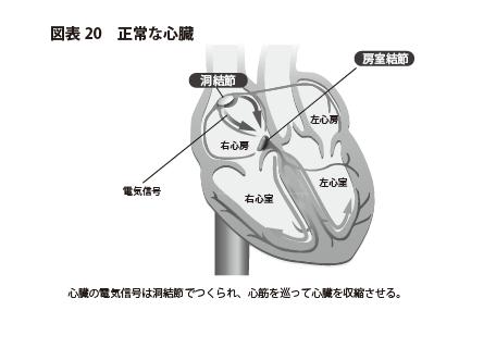 図20 正常な心臓
